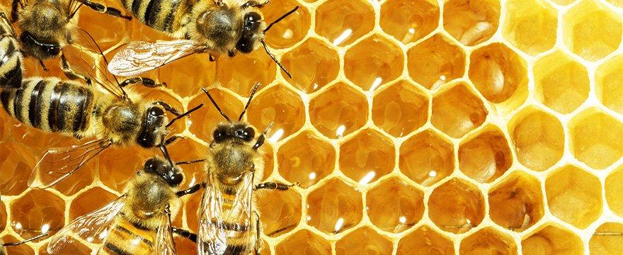 disinfestazioni api con Verceidea Group