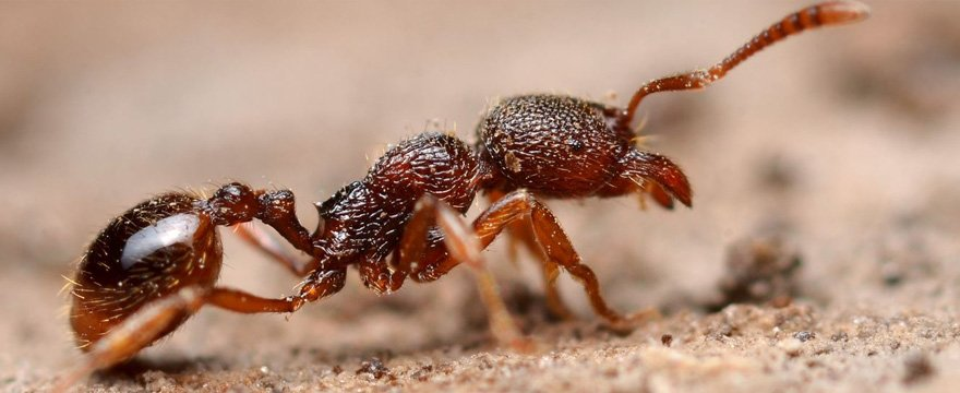 disinfestazioni formiche con Verceidea Group